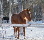 fire horse Royalty Free Stock Images