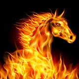 Fire horse. Head of horse in fire on black background Royalty Free Stock Photography