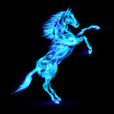 Fire horse rearing up. Blue fire horse rearing up. Illustration on black background Stock Image