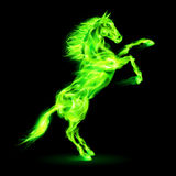 Fire horse rearing up. Green fire horse rearing up. Illustration on black background Stock Image