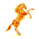 Fire horse rearing up. Illustration on white background Royalty Free Stock Photography