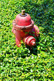 A Fire hydrant with a grass background Royalty Free Stock Photos