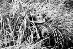 Fire hydrant in the grass. Black and white. royalty free stock photo