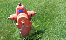 Fire Hydrant. Red fire hydrant in green grass with some weeds at the base Stock Image