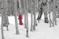 Fire Hydrant in Snow. A bright red fire hydrant standing in the snow amongst a grove of barren aspen trees stock photography