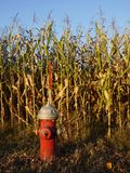 Fire hydrant in sunlit cornfield. Red fire hydrant in sunlit cornfield, late afternoon in fall / autumn Stock Images