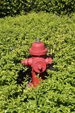 Fire hydrant surrounded by green plants royalty free stock image