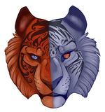 Fire and Ice. Tiger face representing fire and ice Stock Image