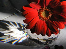 Fire and ice. Artistic still life photograph with a bright red gerbera daisy and a crystal Stock Photo