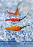 Fire and ice. Red jalapeno peppers on blue ice cubes Stock Photo