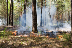 Fire In The Forest Royalty Free Stock Images