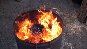 Fire. In a iron barrel Stock Images