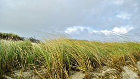 Fire Island Beach Dunes Stock Images