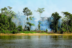 Fire in a Jungle stock image