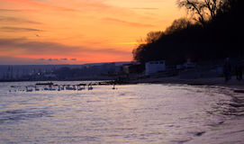 Swans in sunset sea. Photo taken on the Black sea coast, Varna bay on January,2014.after sunset.Varna is well known in Europe seaside resort.Every winter swans royalty free stock image