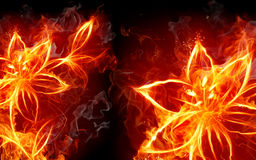 Fire lily Stock Photo