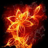 Fire lily. Fire flower on black background Stock Image