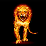 Fire lion. Illustration of fire lion  on black background Stock Image