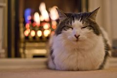By the fire. A long haired cat keeping warm by the fire Stock Photo