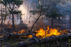 Fire and a lot of smoke, the fires in the forest dry summer. Royalty Free Stock Image