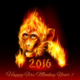 Fire Monkey. Head of fire Monkey. New Years Banner design on black Stock Image