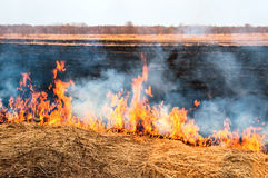 Fire on the nature Stock Image