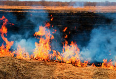 Fire on the nature. The fire on the nature - burns a grass in the field royalty free stock photo