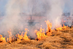 Fire on the nature Royalty Free Stock Image