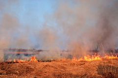 Fire on the nature Stock Photos
