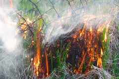Fire nature Royalty Free Stock Image