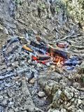 fire, nature, hdr, grill, sausage, ash, earth royalty free stock photo