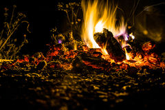 Fire at night. A bonfire and burning coals at night under the open sky Royalty Free Stock Images