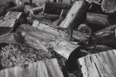 On fire off. A portion of firewood waiting to be used in the farm`s boiler, reflecting some apprehensive feeling that can burn anytime royalty free stock images