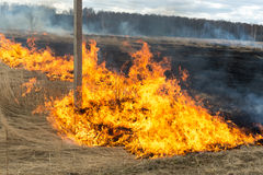 Fire. old grass burning in a field near the forest Stock Images