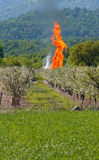 Fire in orchard Royalty Free Stock Photography