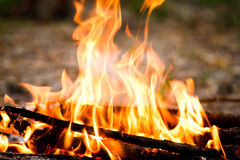 Fire outdoors Stock Photography