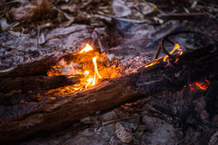 Fire in outdoors fire pit - Camp fire. Royalty Free Stock Image