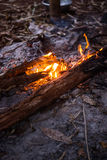 Fire in outdoors fire pit - Camp fire. Royalty Free Stock Photography