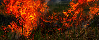 Fire on paddy grass Stock Photos