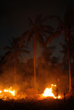 Fire and palm trees at night Stock Photos