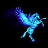 Fire Pegasus. Blue fire Pegasus rearing up. Illustration on black background Royalty Free Stock Photo