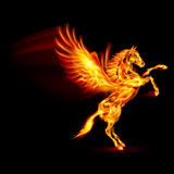 Fire Pegasus. Fire Pegasus rearing up. Illustration on black background Stock Image
