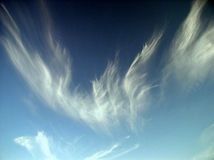 Fire phoenix. Phoenix (cloud in a shape of phenix Stock Photos