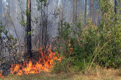 Fire in the Pine Forest. A wild fire in the southern pine forest stock photo