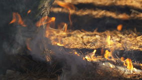 Fire in a Pine Forest stock footage