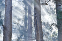 Fire in the pine grove Stock Images