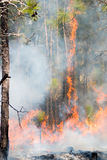 Fire in the Pines 2. This photo was taken of a controlled burn of a long leaf pine habitat just outside of Croatan National Forest in North Carolina Stock Photos
