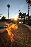 Fire pit flames and palm trees Stock Image