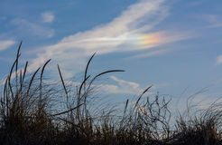 Fire Rainbows - circumhorizontal arc Stock Image