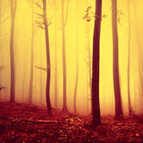 Fire red oversaturated forest background Stock Photography